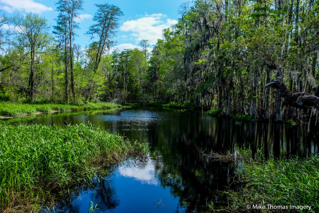 florida, lake, dinosaur, nature, wildlife, forest, woods