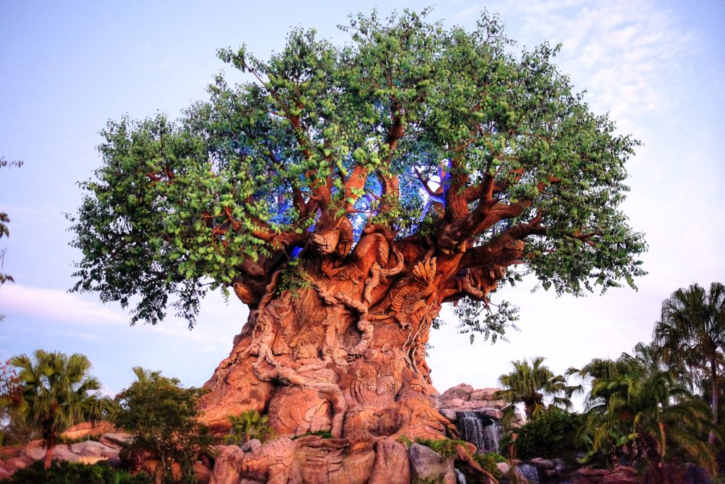 disney, animal kingdom, tree of life, nature, wildlife, theme parks