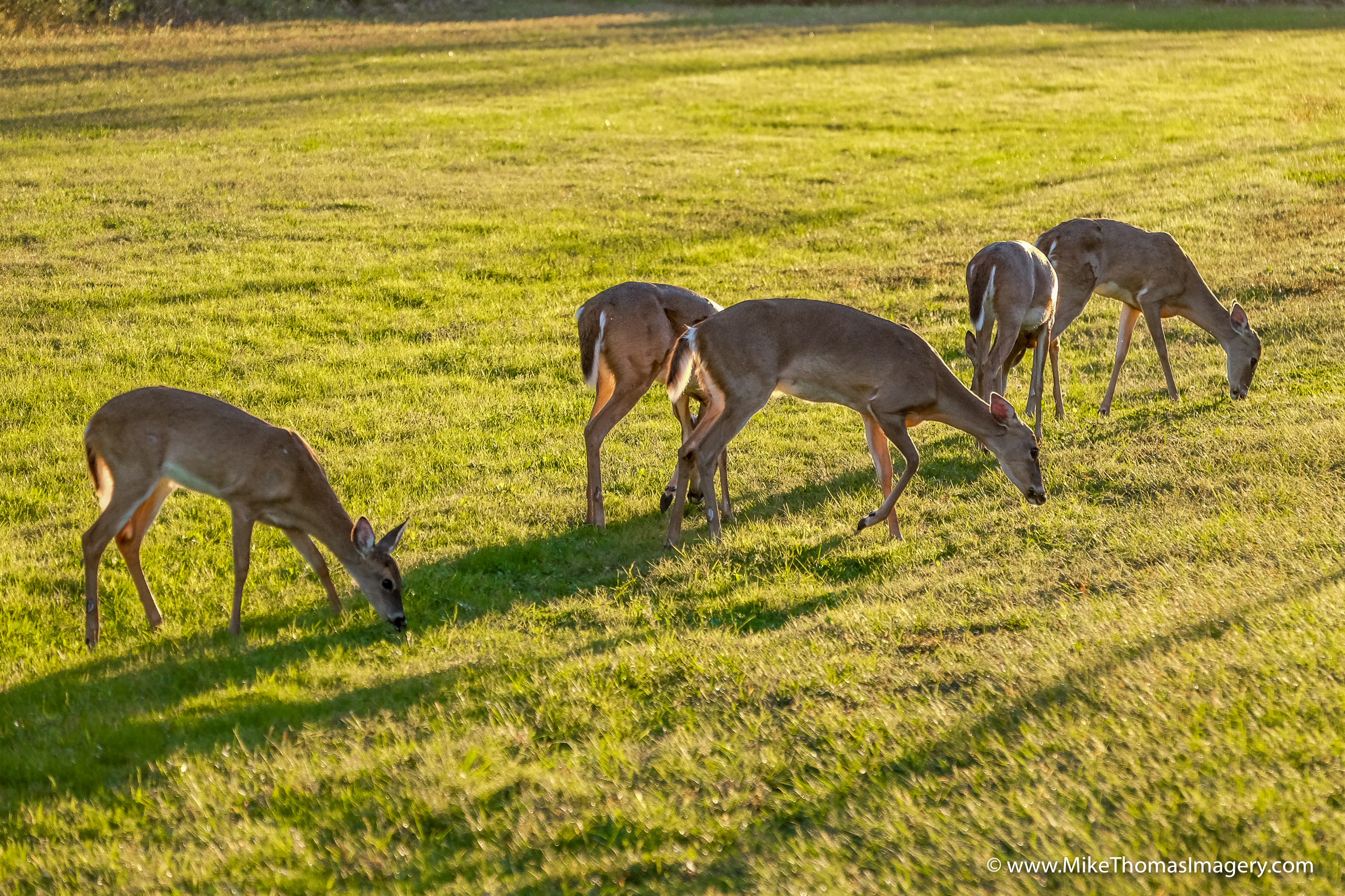 deer, bambi, nature, disney, herd, wildlife
